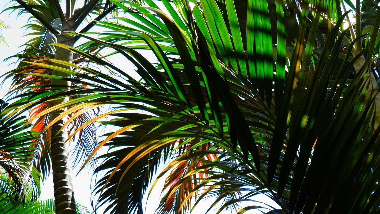 Palm Pixabay