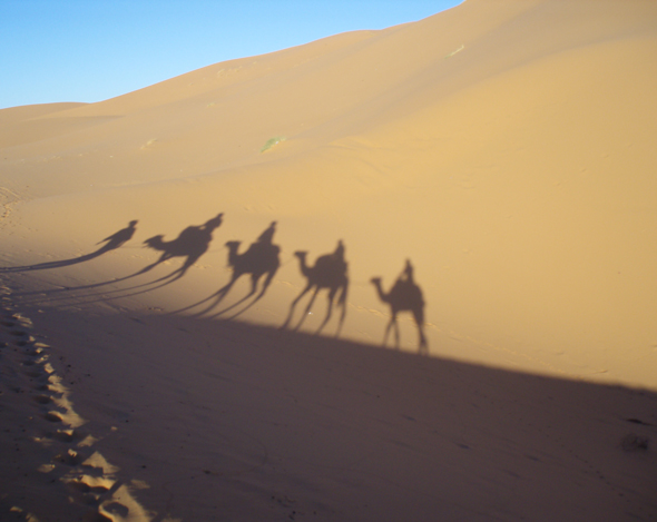 Shadows of camels crossing the desert.