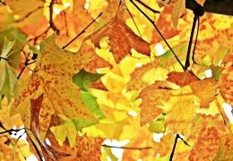 Autumn Pixabay